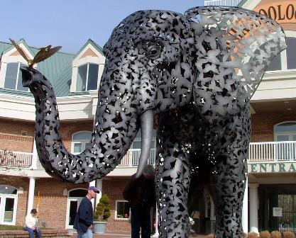 elephant_front