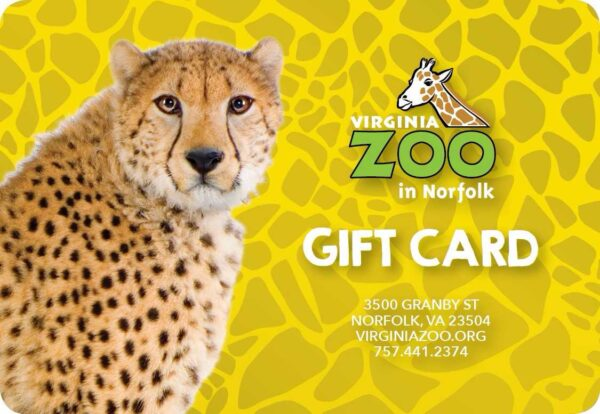 Example of a Cheetah Gift Card