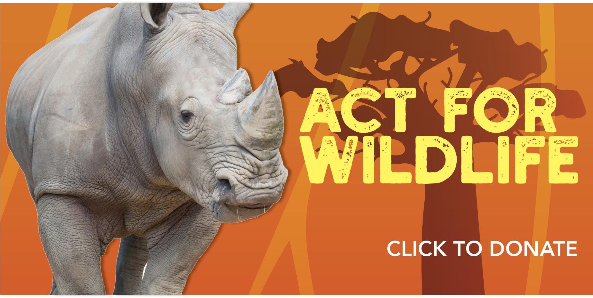 VAZOO_Act for Wildlife Online_rhino_slider2
