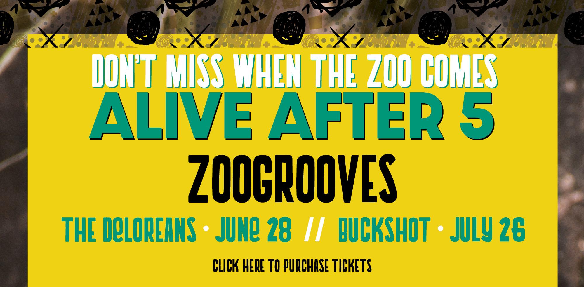 VAZOO_Alive zoogrooves_homepage slider