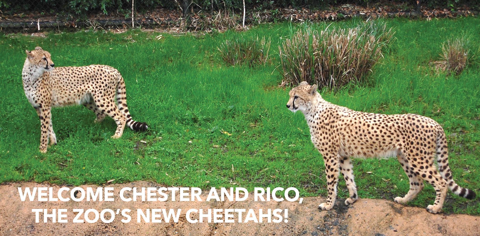 VAZOO_Cheetah web slider