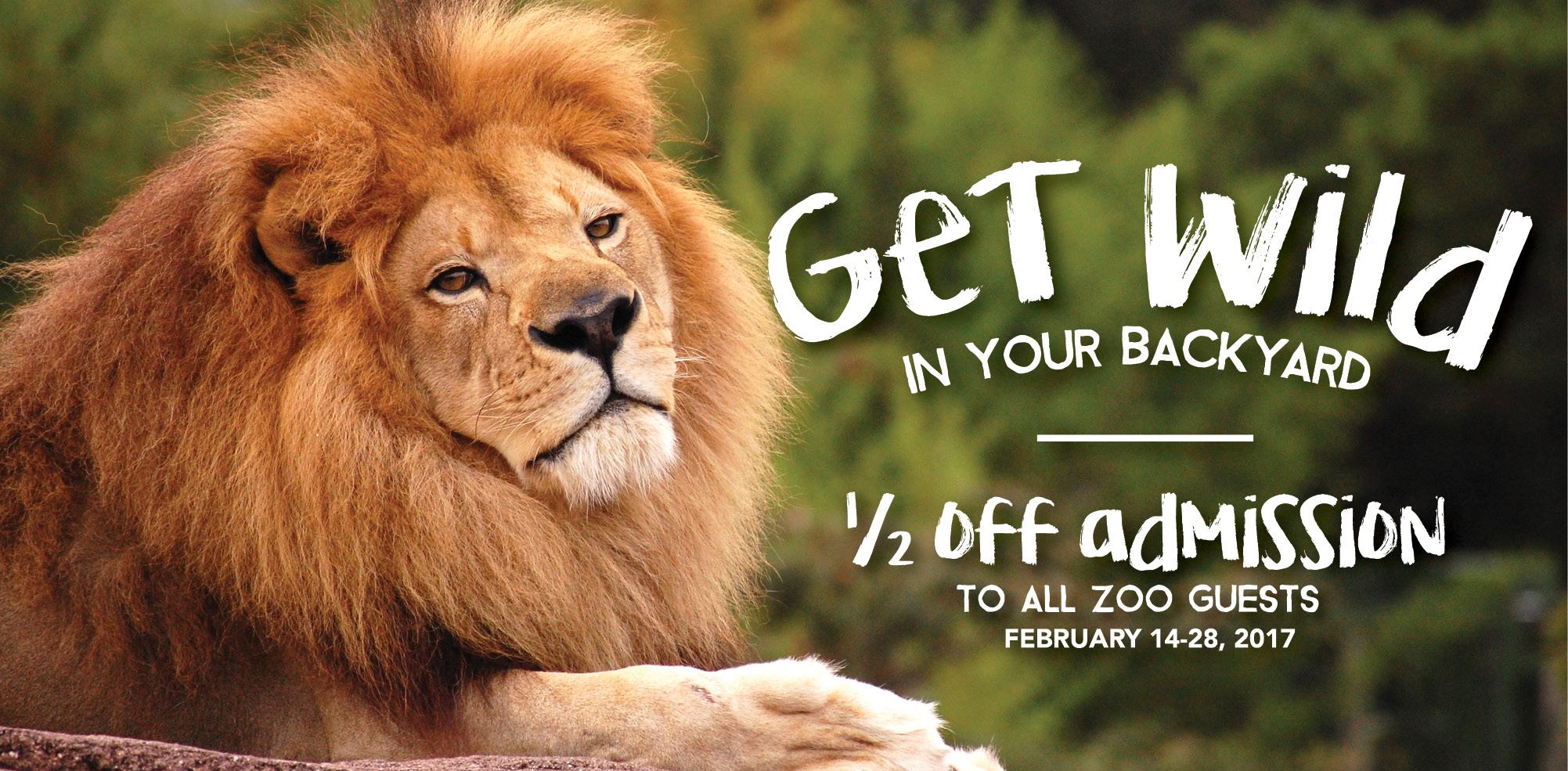 VAZOO_Get Wild Discount web banner