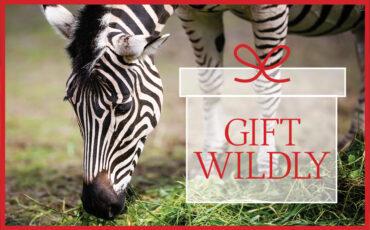 VAZOO_Gift Wildly web button