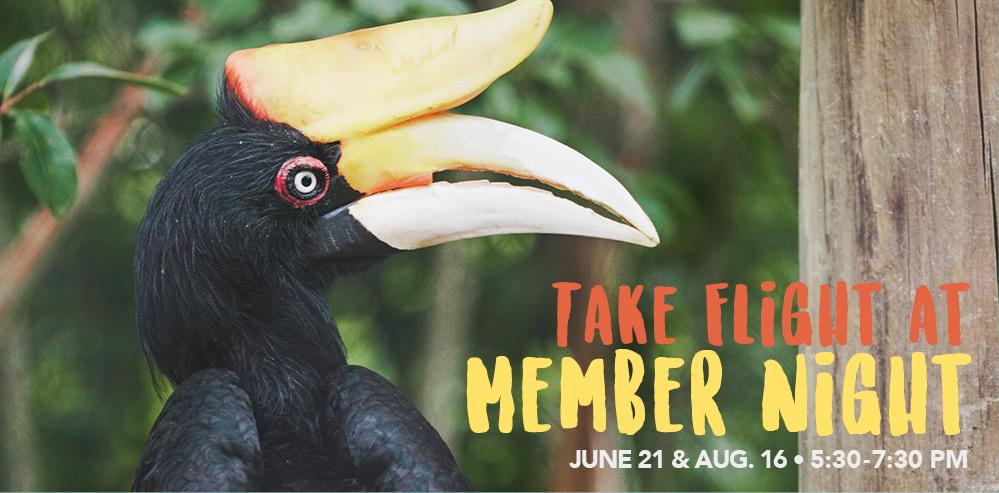 VAZOO_Member Night Online_homepage banner