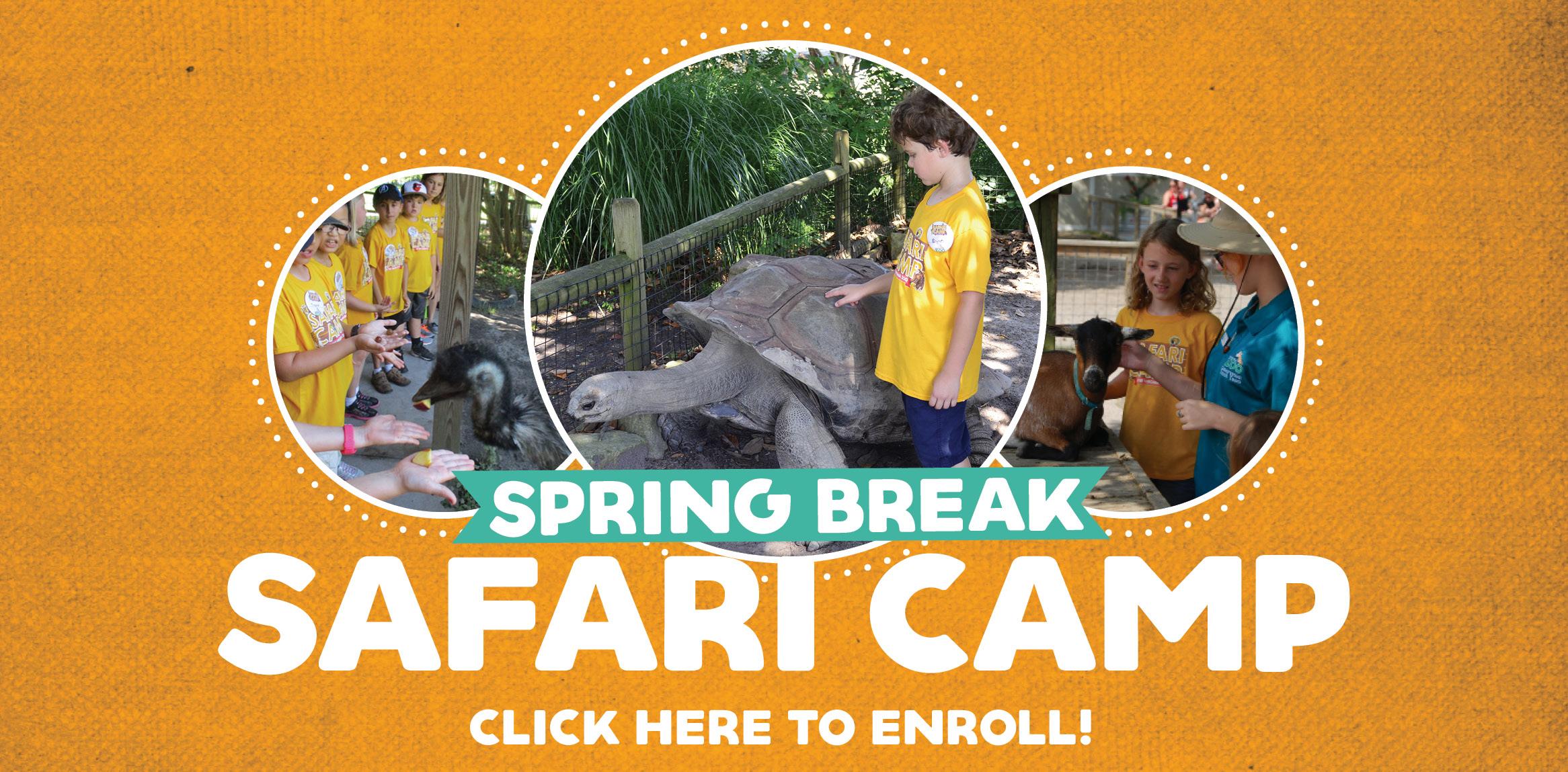 VAZOO_Spring Camp_homepage banner