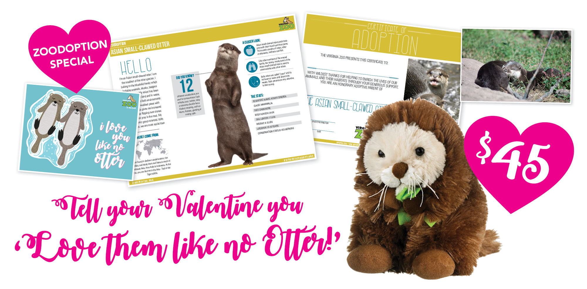 VAZOO_Vday Otter 2018_homepage slider