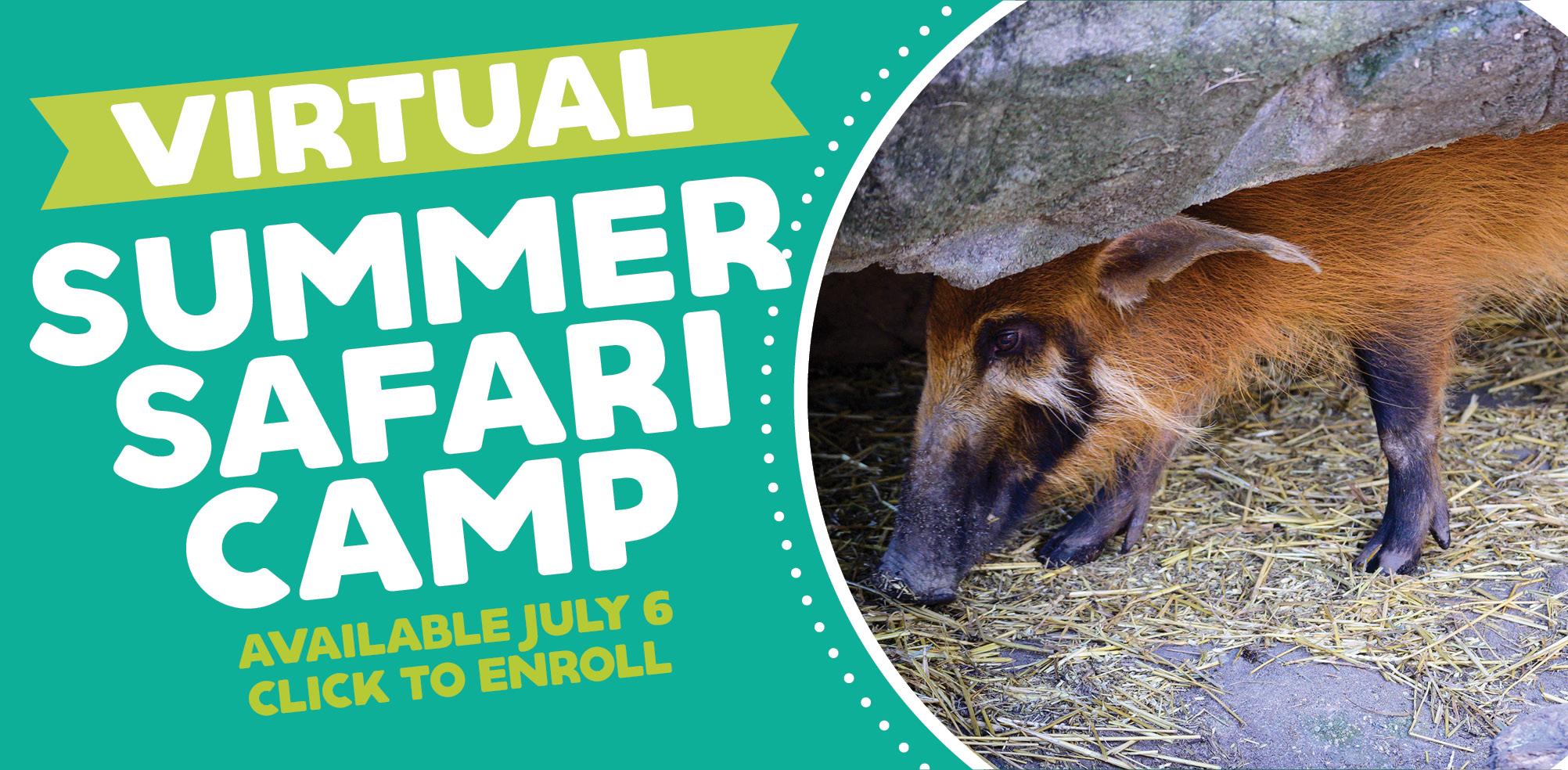 VAZOO_Virtual Summer Camp online_homepage
