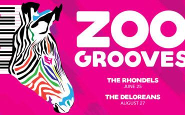 VAZOO_ZooGrooves Website Slider