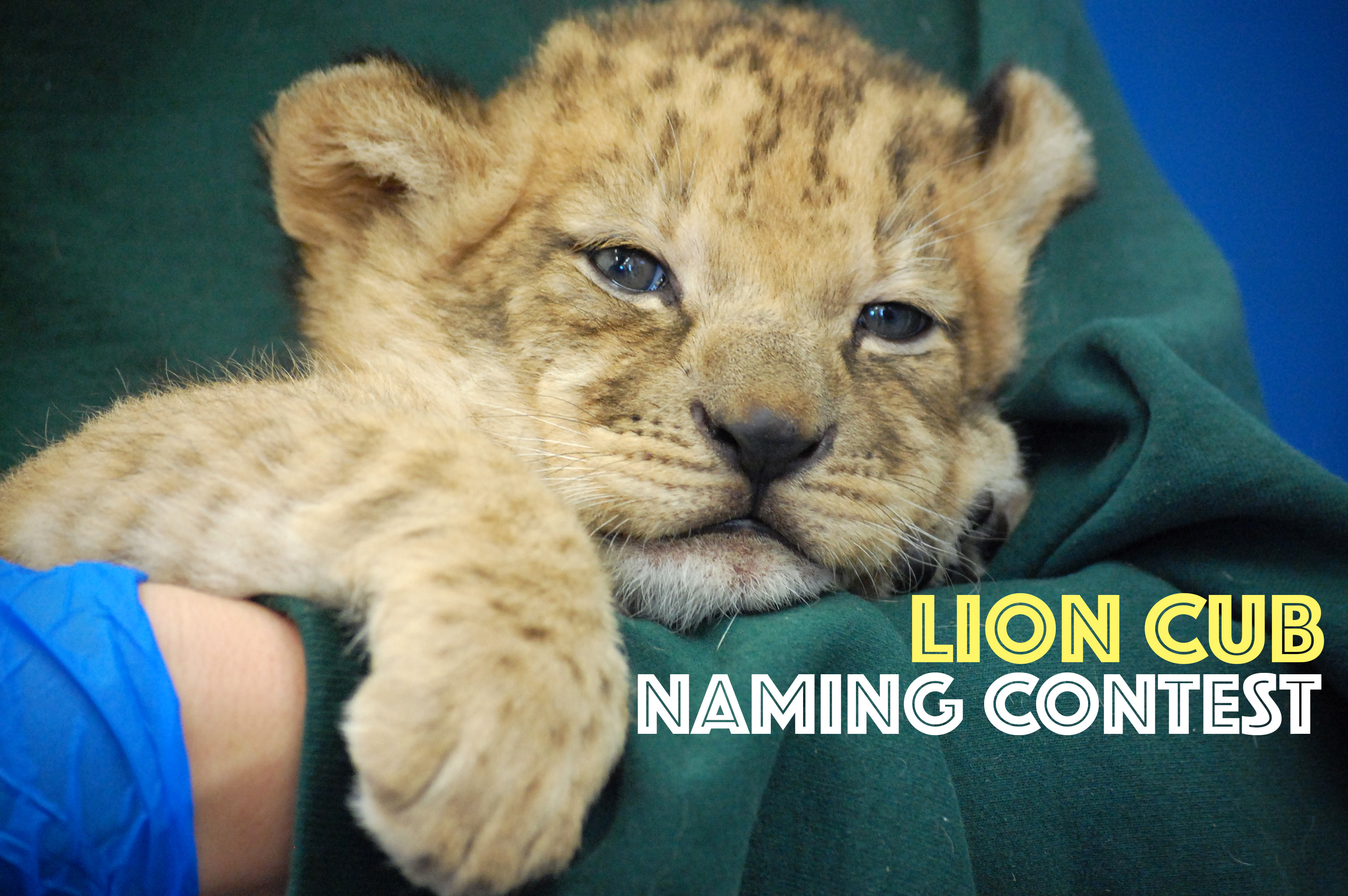 cub naming contest banner
