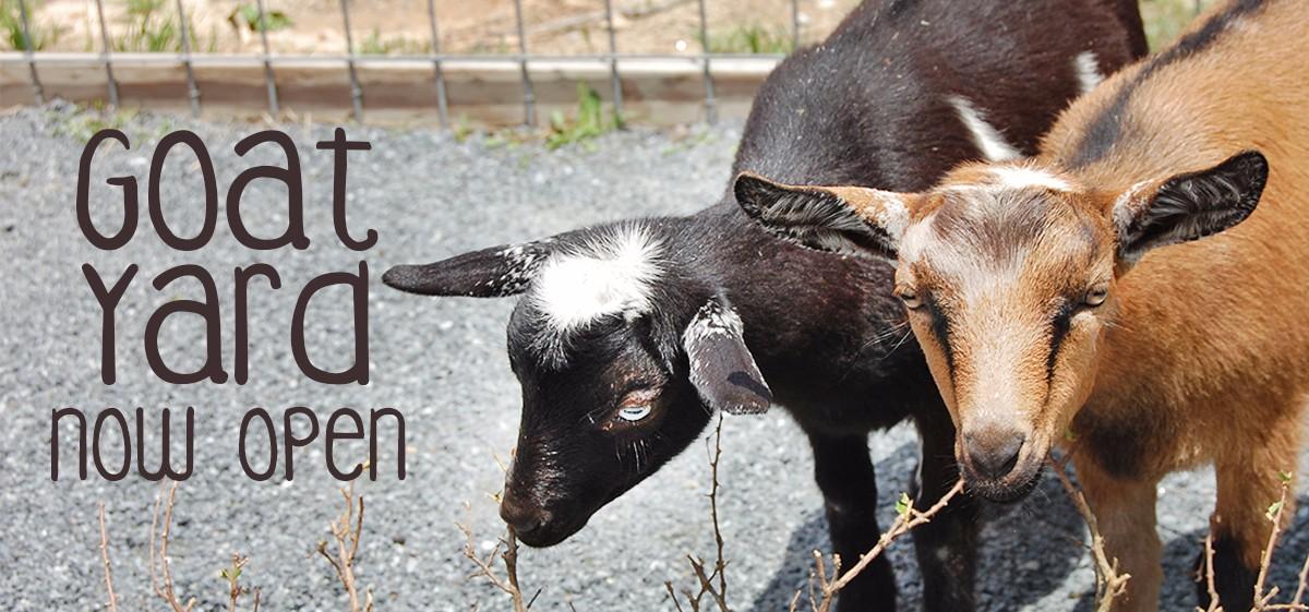 goat-yard-open