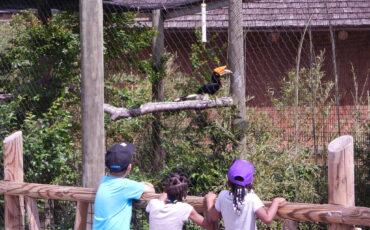 kids meet hornbill (2)