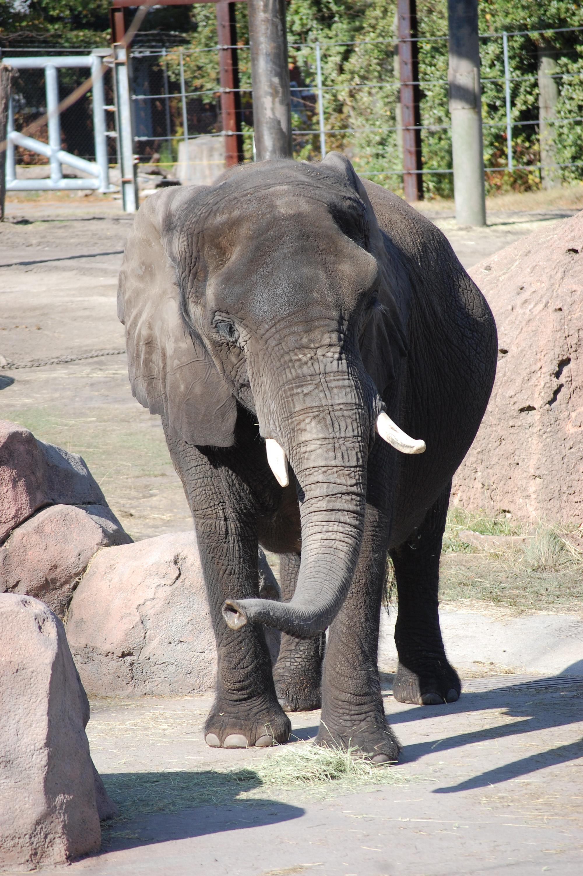 Elephant News - Virginia Zoo in Norfolk