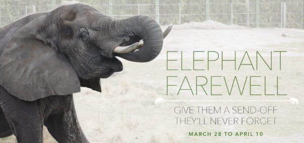 VAZOO_Elephant Farewell Email Banner