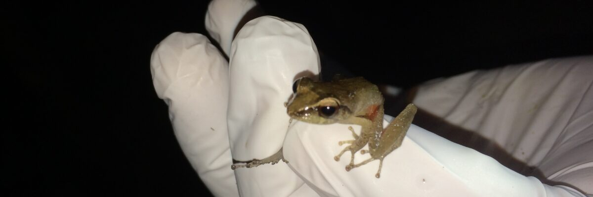frog in hand 3 (2)