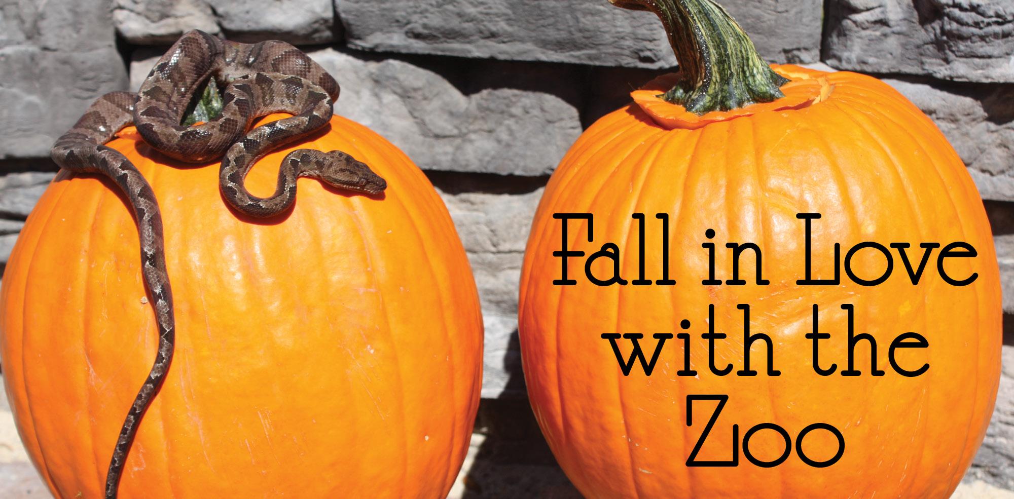 VAZOO_Fall in Love Website Slider