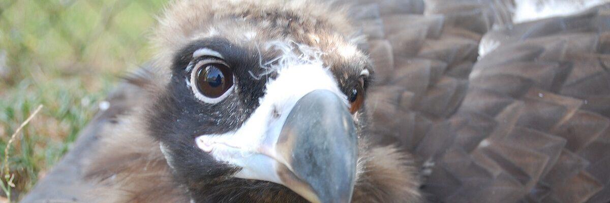 vulture banner2
