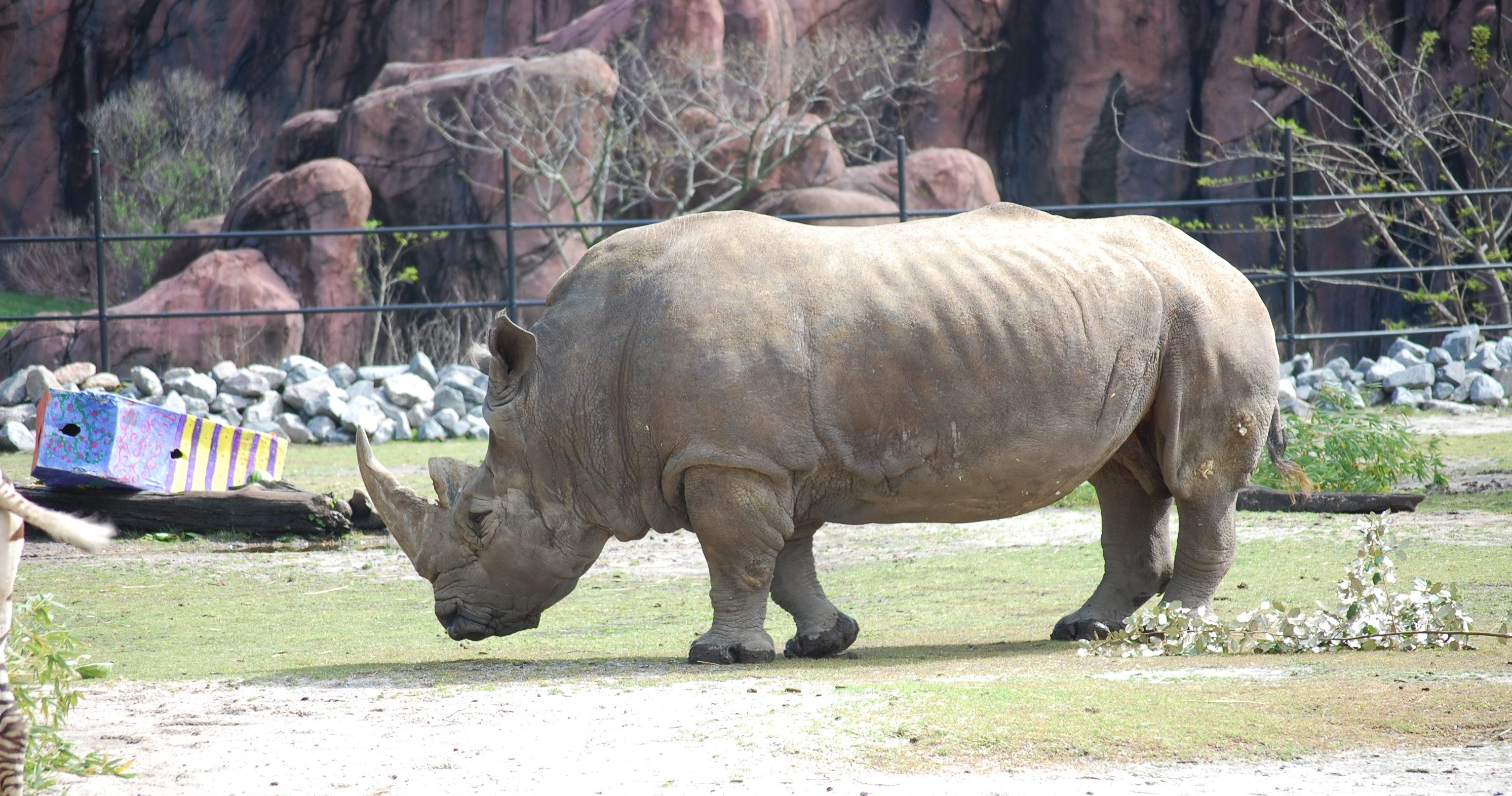 Get To Know Our Rhino Virginia Zoo In Norfolk