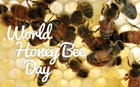 VAZOO_Honey Bee Day web button