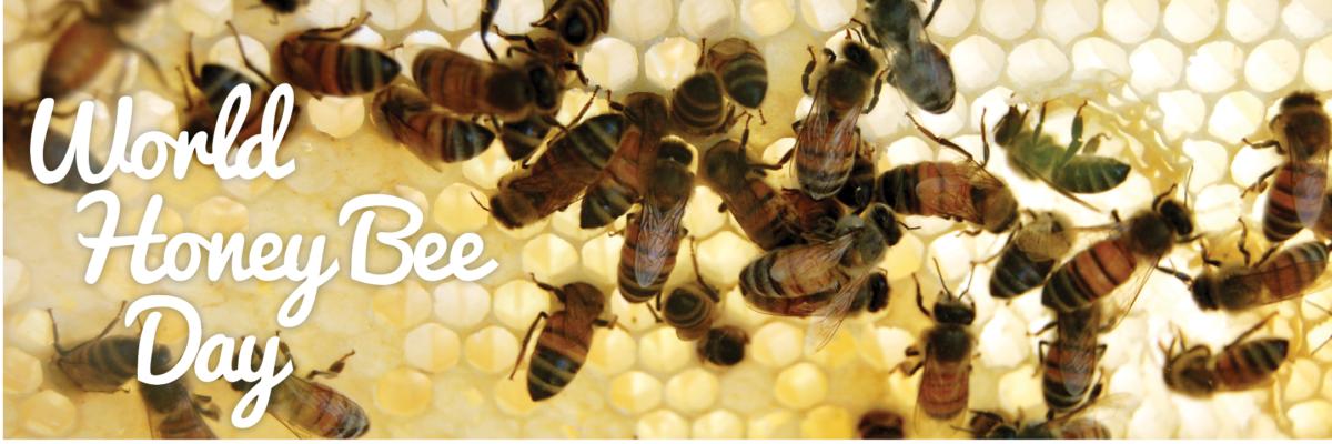 VAZOO_Honey Bee Day web page
