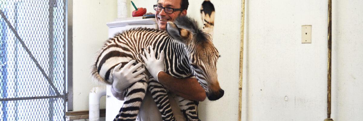 baby zebra1