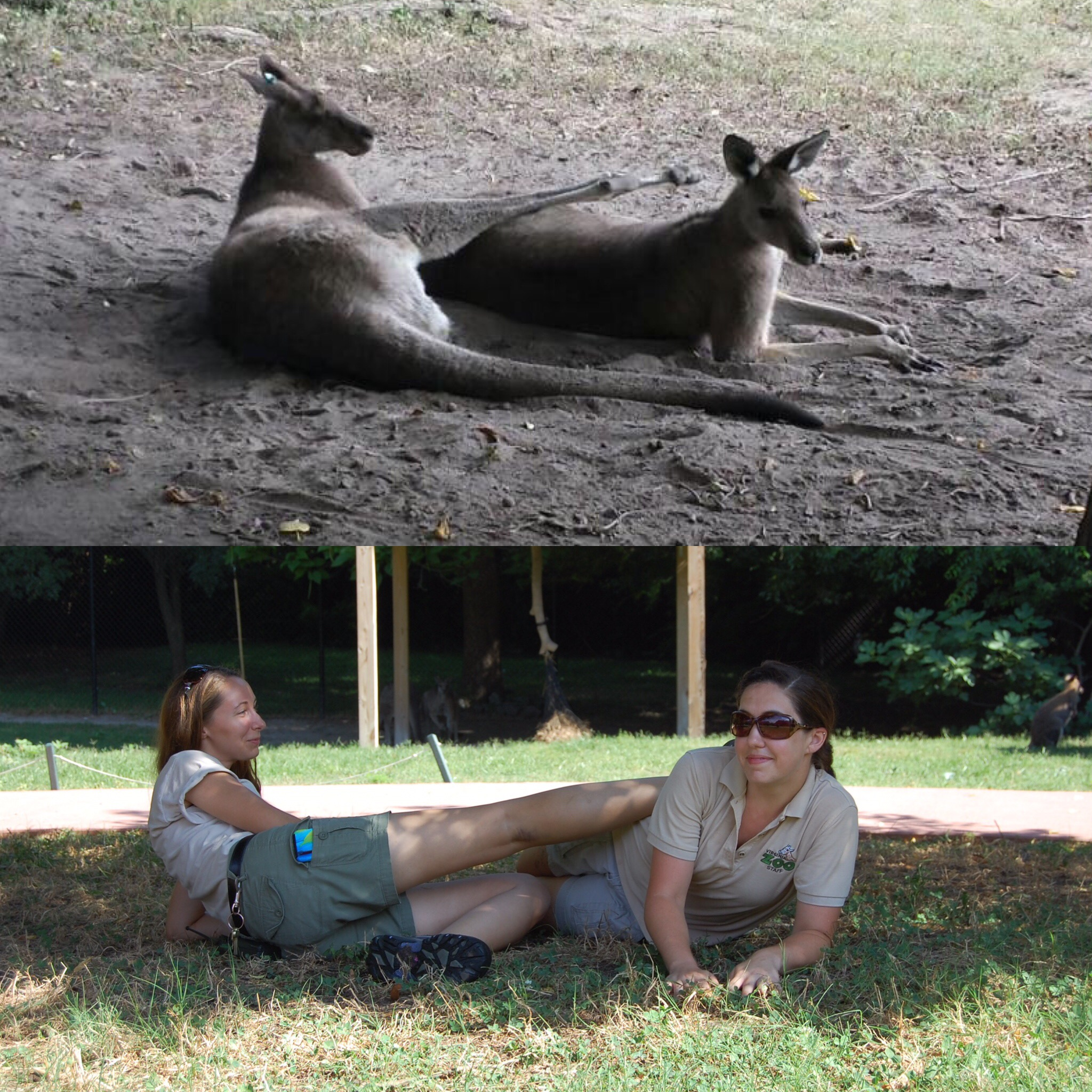 Patient Of The Week At Australia Zoo: National Zoo Keeper Week Wrap Up