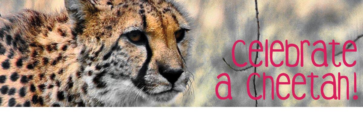 VAZOO_Cheetah Apprecation online