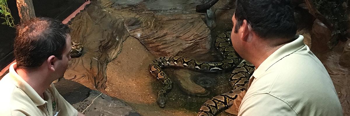 reptile team