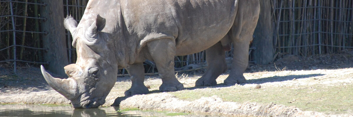 VAZOO_World Rhino Day web page