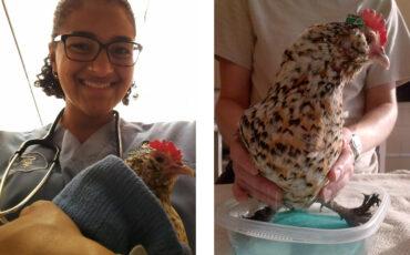 Virginia Zoo Chickens Education