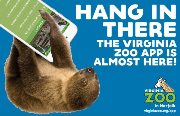 vazoo_app-promo_hang-in-there