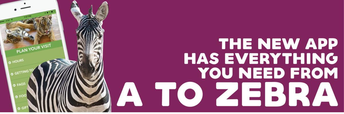 vazoo_app-web-page-zebra