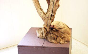 dudley-sleeping