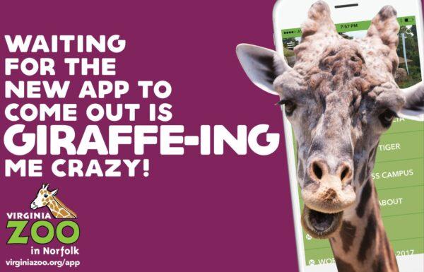 thumbnail_vazoo_app-promo_giraffeing-crazy