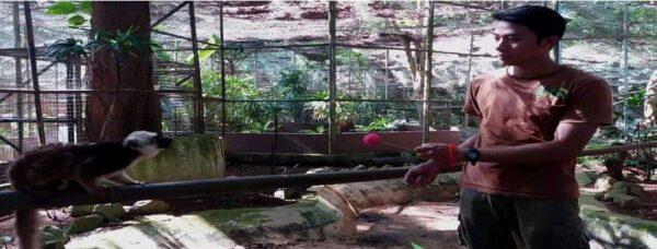 lemur-training