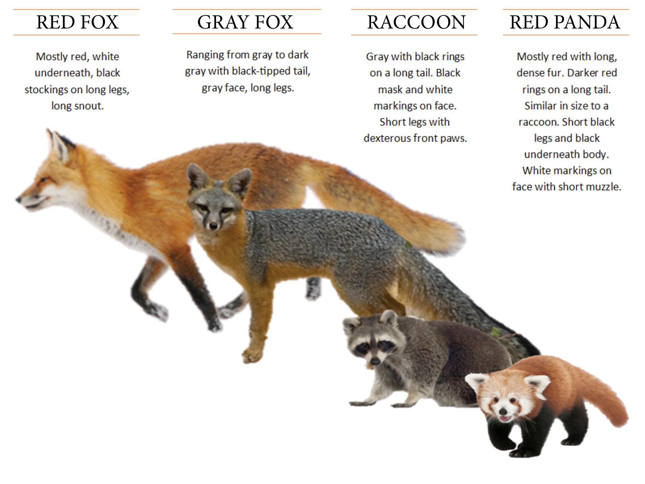 Virginia Zoo Red Panda Is Missing From Habitat