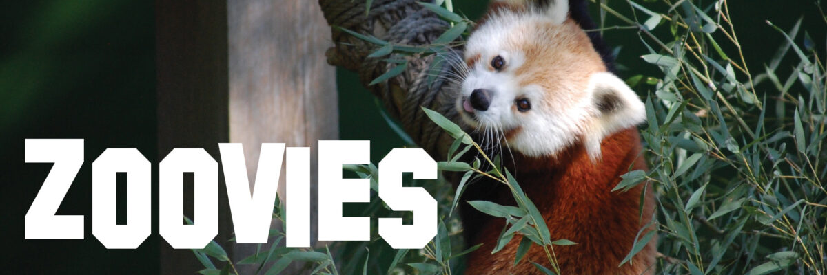 zoovies graphic banner with red panda