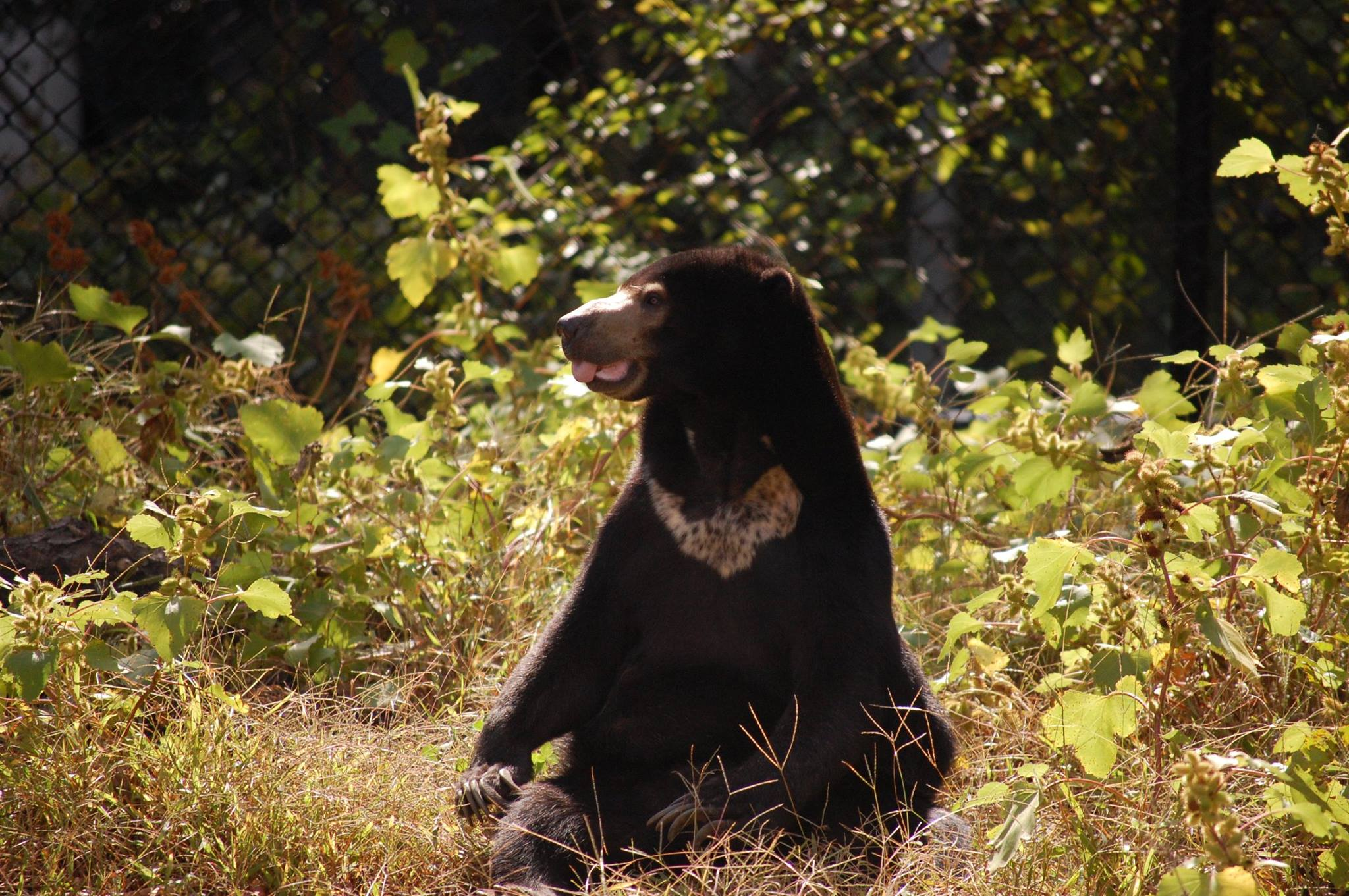 beary cool animals virginia zoo in norfolk