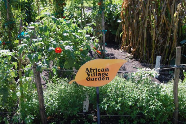 African Vegetables And Flowers Remind Us Of The Exotic Origins Of Many Of  Our Regional Favorites. For Garden Information, Download The PDF.
