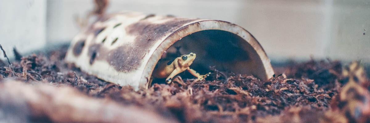 Reptiles En-Danger of Going Extinct - Virginia Zoo in Norfolk