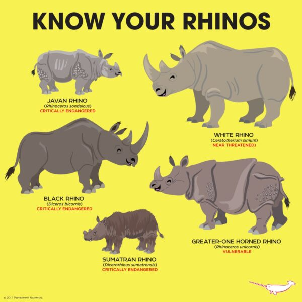 Striking out Rhino Extinction