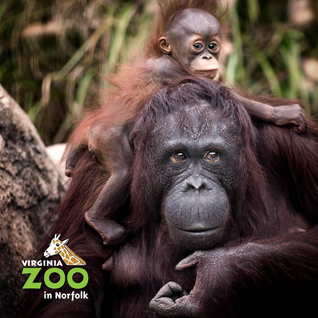 Virginia zoo app virginia zoo in norfolk.