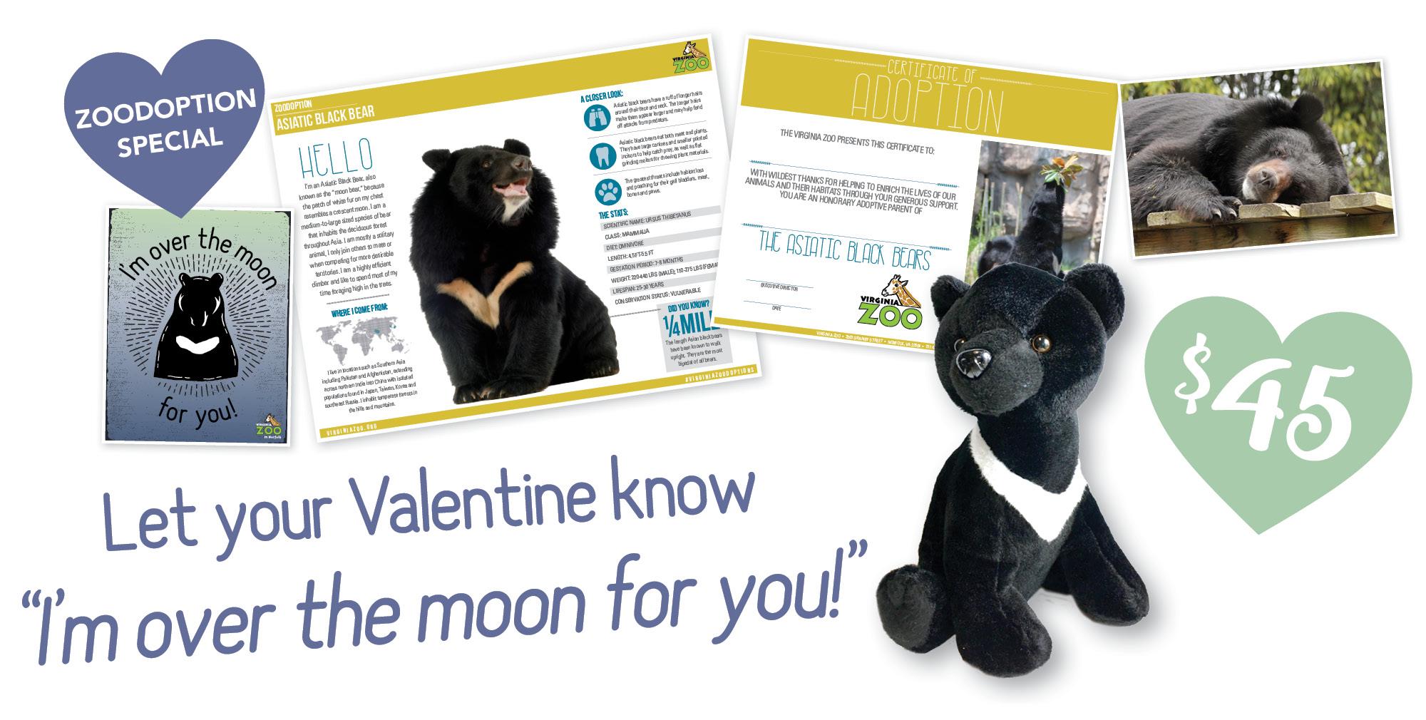 VAZOO_Vday Moon Bear_home slider