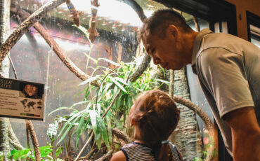 Father and young daughter look at geckos in exhibit