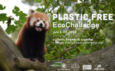 Red panda panting with plastic free ecochallenge text and logos