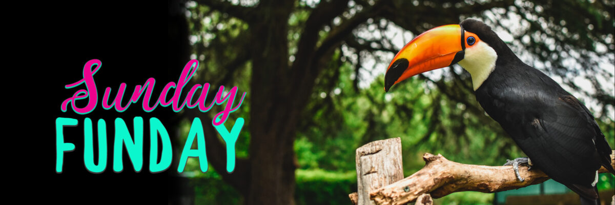 Sunday Funday graphic with toucan