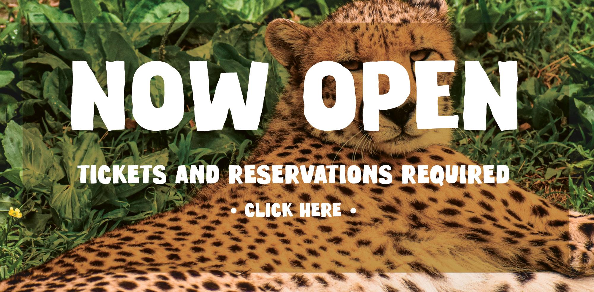 VAZOO_Now Open_homepage
