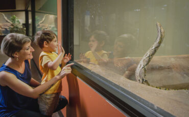 mother and son in front of reticulated python exhibit