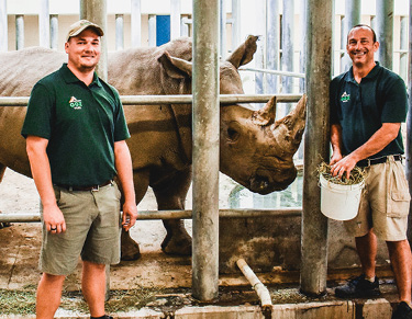 two male zoo keepers with White rhino