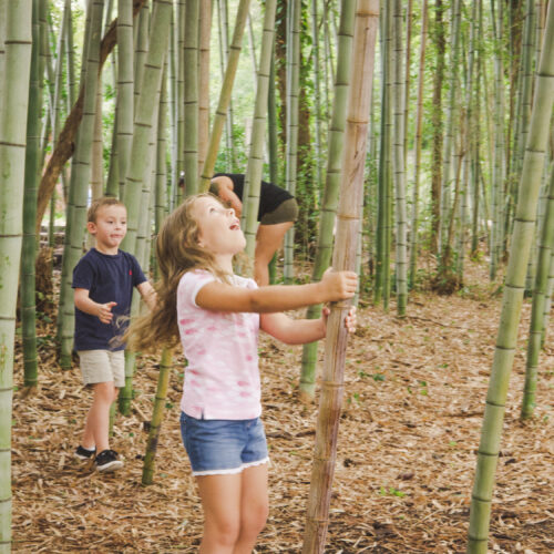 Kids in a bamboo forest