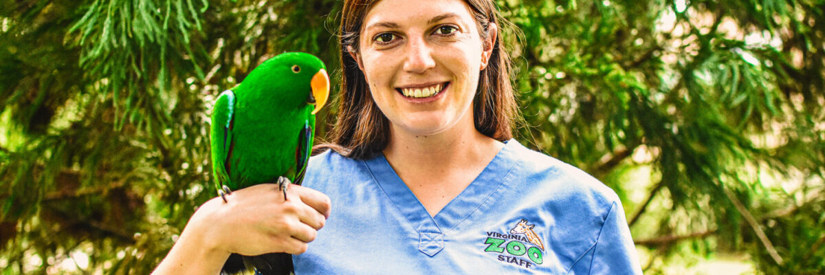 Zoo Vet holding Eclectus parrot